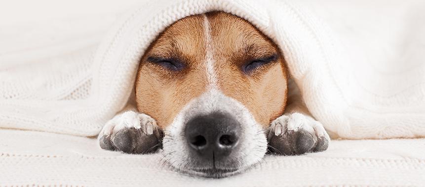 So wichtig ist Schlaf